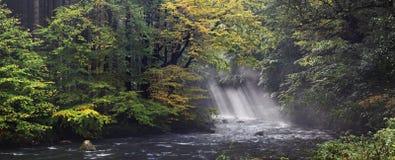 Jesieni lub lata brzeg rzeki z bukowymi liśćmi Świezi zieleni liście na gałąź above - woda robi odbiciu Dżdżysty wieczór przy str zdjęcia royalty free