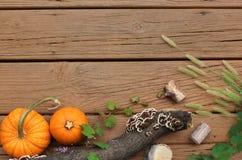 Jesieni lub spadku granica tło z/Dyniowym kabaczkiem i gałąź Zdjęcie Stock
