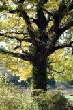 jesienią magii fotografia stock
