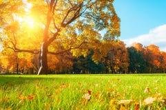 Jesieni malowniczy drzewo w pogodnym jesień parku zaświecał światłem słonecznym - jesieni drzewo w świetle słonecznym Zdjęcia Stock