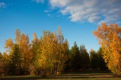 Jesieni malowniczy miejsce Położenia słońce maluje drzewa Złotych w kolorze Fotografia Stock