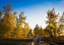 Jesieni malowniczy miejsce Położenia słońce maluje drzewa Złotych w kolorze Droga prowadzi podróżników w odległość Obrazy Stock