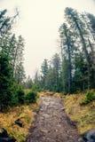 Jesieni mgła nad rzeką i lasem - Piękny spadku krajobraz z rzeką iść przez kamieni, otaczających lasami w jesieni co zdjęcia royalty free