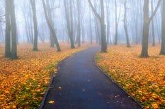 Jesieni mgłowa aleja - kolorowej jesieni mgłowy krajobrazowy widok Zdjęcie Royalty Free