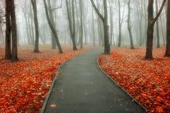 Jesieni mgłowa aleja - kolorowej jesieni mgłowy krajobrazowy widok Zdjęcie Stock
