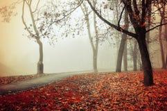 Jesieni mgłowa aleja - parkowy jesień krajobraz Zdjęcia Stock