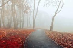 Jesieni mgłowa aleja - parkowy jesień krajobraz Jesieni parkowa aleja w zwartej mgle Obraz Royalty Free