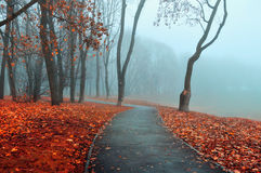Jesieni mgłowa aleja - parkowy jesień krajobraz w zimnych brzmieniach Jesieni natury widok Fotografia Stock