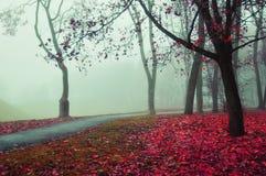 Jesieni mgłowa aleja - piękny jesień krajobraz Zdjęcie Stock