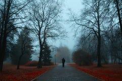 Jesieni mgłowa aleja - tajemniczy jesień krajobraz Zdjęcie Stock