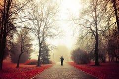 Jesieni mgłowa aleja - tajemniczy jesień krajobraz Fotografia Royalty Free