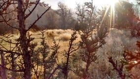 Jesieni mgły wysokości pustyni mroźny ranek Zdjęcia Royalty Free