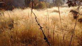 Jesieni mgły wysokości pustyni mroźny ranek Obraz Stock