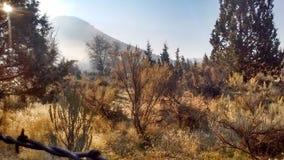Jesieni mgły wysokości pustynia Obrazy Stock