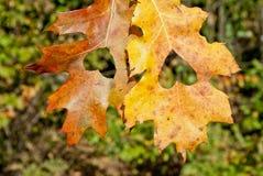 Jesieni miłość Obraz Stock