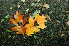 Jesieni miłość Fotografia Stock