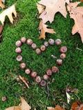 Jesieni miłość Zdjęcie Stock