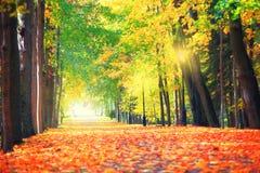 Jesieni miasta natura Zdjęcie Stock