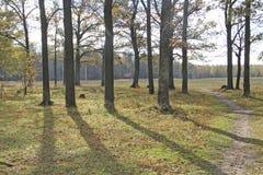 Jesieni miasta park Obraz Stock