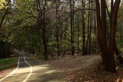 Jesieni miasta park Fotografia Stock