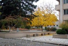 Jesieni miasta park Zdjęcia Royalty Free