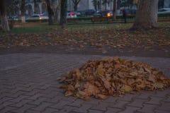 Jesieni miasta park posypujący z spadać żółtymi liśćmi Miasto wieczór park w jesieni z ścieżkami posypywać Obrazy Stock