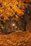 Jesieni miasta park przy nocą Zdjęcia Royalty Free
