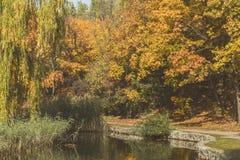 Jesieni miasta park Park w spadek Kaczki pływanie w stawie bryg Zdjęcie Royalty Free