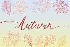 Jesieni muśnięcia ręka pisać tytuł z kolorowymi jaskrawymi liśćmi Obraz Stock