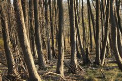 Jesieni nadzy drzewa bez ulistnienia Fotografia Royalty Free
