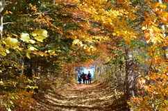 Jesieni nakreślenia gdy wspinający się w górach zdjęcia stock