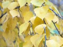 Jesieni nakreślenie z żółtymi liśćmi fotografia stock