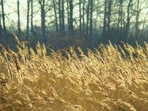 Jesieni nakreślenia Fotografia Stock