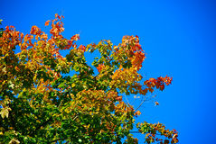 Jesieni nakreślenie Obrazy Stock