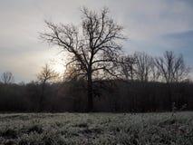 Jesieni natura, gdy ono zaczyna dostawać zimno Obraz Stock