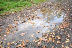 Jesieni natura - woda na drodze Zdjęcia Royalty Free