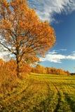 Jesieni natura z niebieskim niebem zdjęcia stock