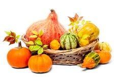 Jesieni naturalna dekoracja na białym tle Zdjęcie Stock