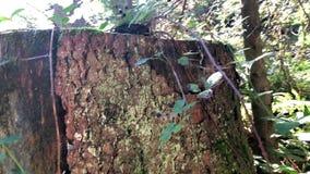 Jesieni naturalny tło z lasowymi czernicami zbiory wideo