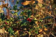 jesieni natury krótkopęd podczas zmierzchu obraz stock
