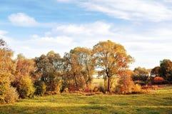 Jesieni natury krajobraz - złoci jesieni drzewa w jesieni pogodnej pogodzie Obrazy Stock