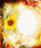 Jesieni natury tło z kolorowym ulistnieniem i słonecznikami Spadek plenerowa natura, Zdjęcia Royalty Free
