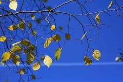 Jesieni niebieskie niebo i liście Zdjęcie Royalty Free