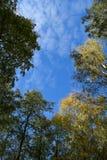 Jesieni niebo Zdjęcia Royalty Free