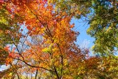 Jesieni niebo i drzewa Zdjęcia Royalty Free