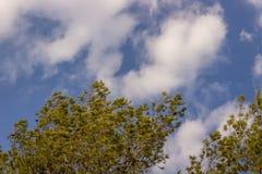 Jesieni niebo I drzewo zdjęcie stock