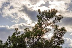 Jesieni niebo I drzewo obrazy royalty free