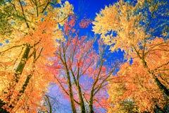 Jesieni niebo i kolory obraz royalty free
