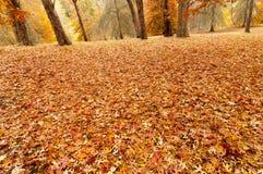 Jesieni żniwa czas Zdjęcie Royalty Free
