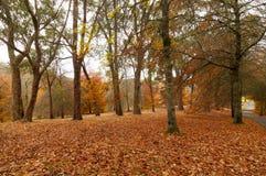 Jesieni żniwa czas Obraz Royalty Free